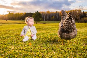 A baby looks a a chicken as it walks past during sunset.