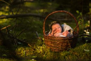 A new born baby sits in a basket in the forest, shot at Thunder Bay Tree Farm by Bryan Bishop